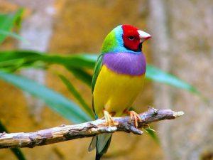 انواع پرنده کمیاب و زیبا