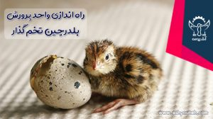 راه اندازی واحد پرورش بلدرچین تخم گذار