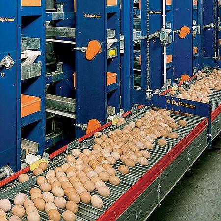 سیستم جمع آوری تخم مرغ