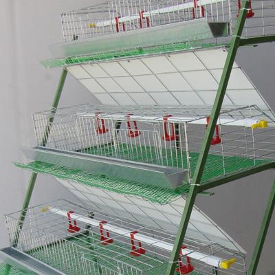 انواع قفس برای نگهداری مرغ